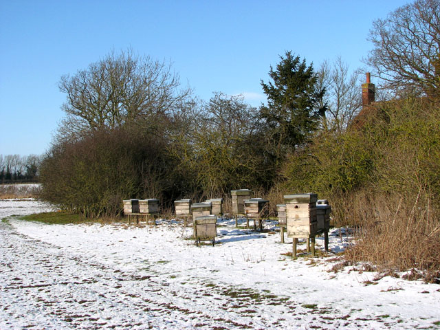 Beehives south of Highfield Lane