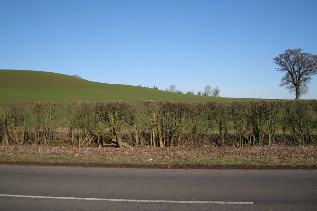 Hillside east of Ham Farm