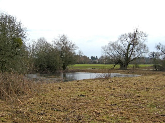 Temporary pond in Northwick Marsh SSSI