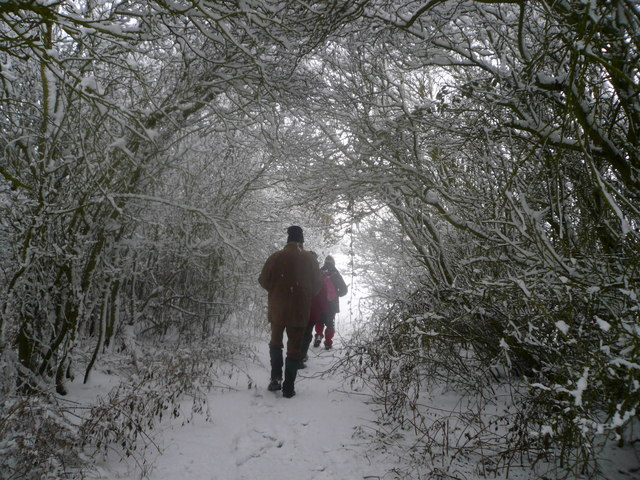 Tree tunnel in the snow near Newton Blossomville