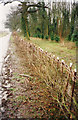 SU8281 : Hedge Laying 1995 by john shortland