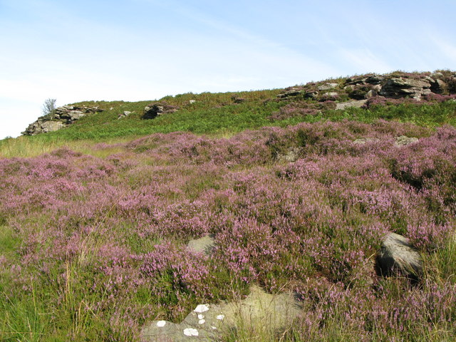 Heather below Banno Crags