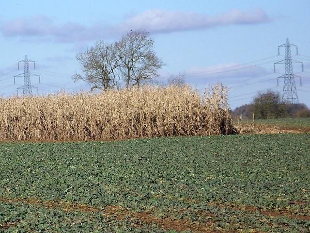 Crops, Eastleach Martin