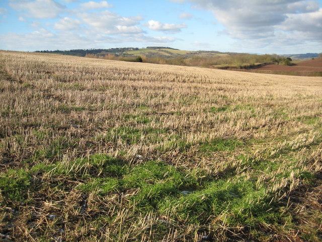 Farmland in the Teme valley