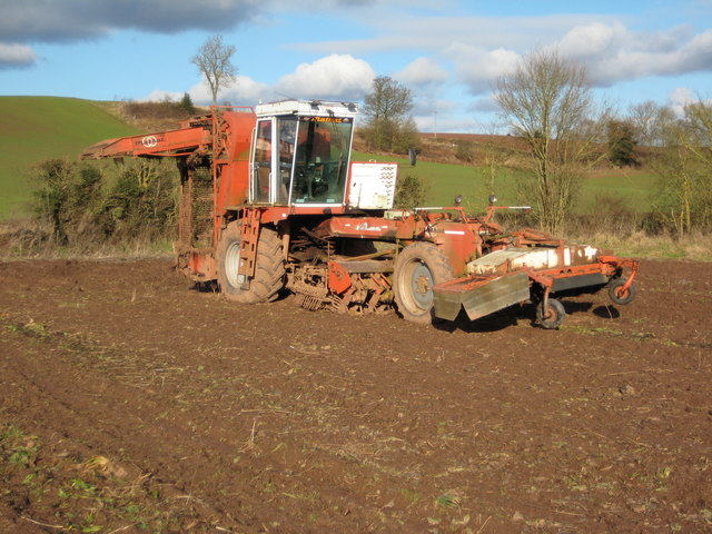 Sugar beet harvester at Martley