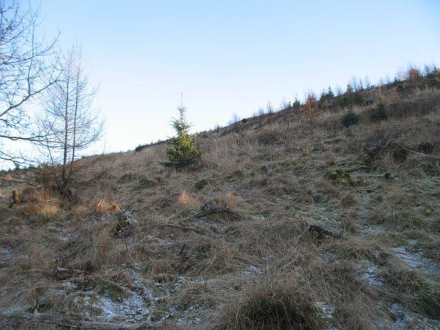 Pitcur Wood