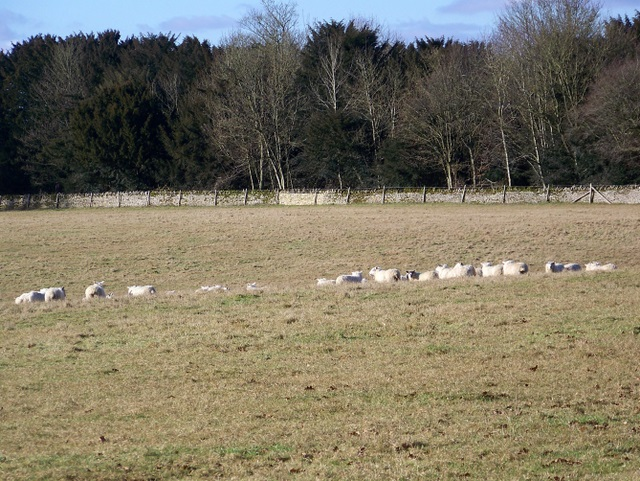 Rough grazing near Bradwell Grove