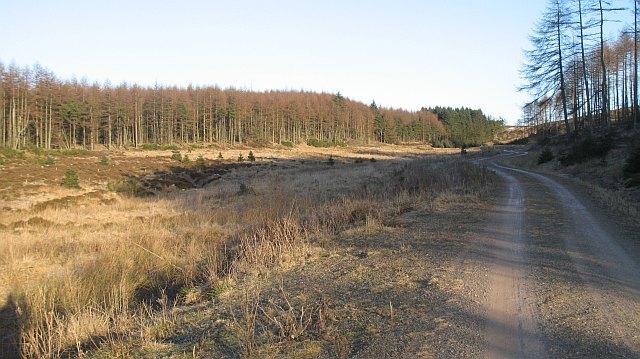 Lundiecra Wood