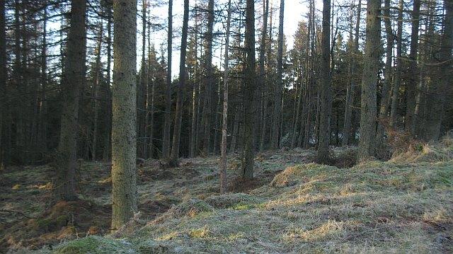 Drumsuldry Wood