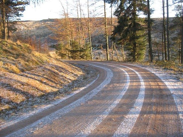 Logging road, Drumsuldry Woods