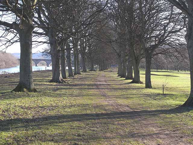 Avenue of trees, Tyne Green Country Park