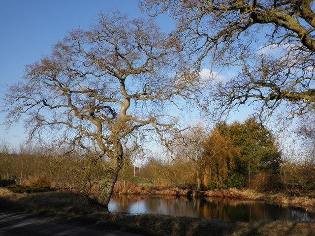 Pond, near Hampton Bishop