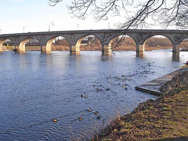 Ducks on the Tyne