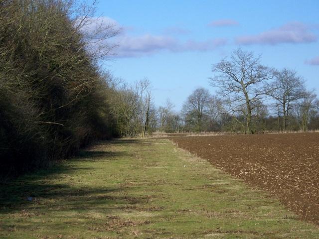 Field headland near Shilton