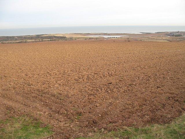 Ploughed field, Pinkerton