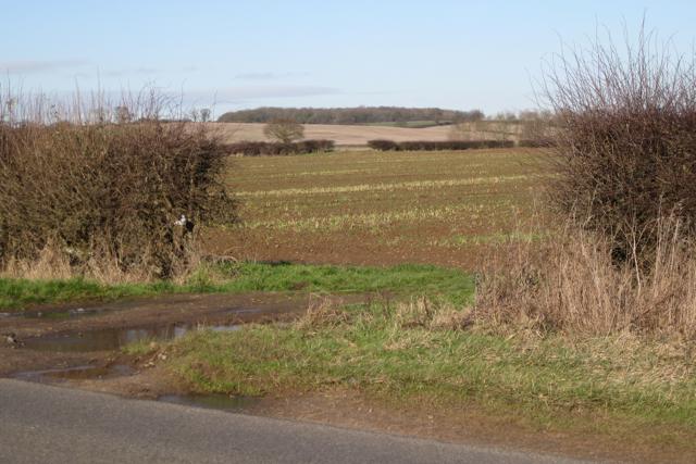 Gaps in hedges north of Ham Barn