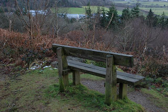 Seat in Allt Ddêl woods