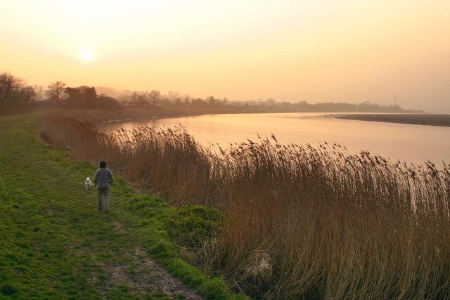River Severn Framilode - Reeds at Dusk