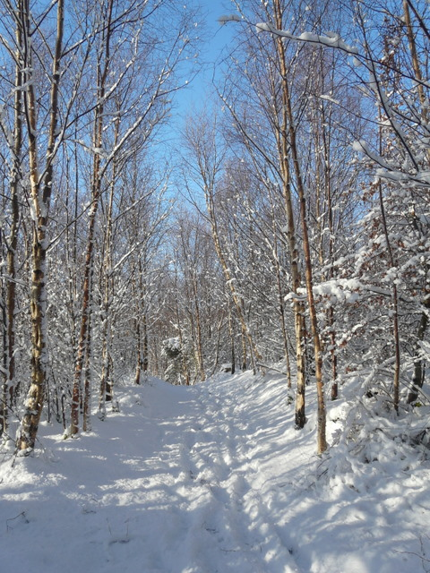 Path in Dunrobin woods