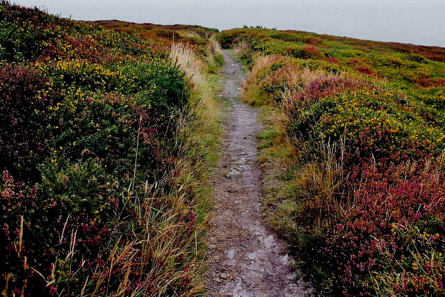 Mull Hill - Footpath on east side of the hill