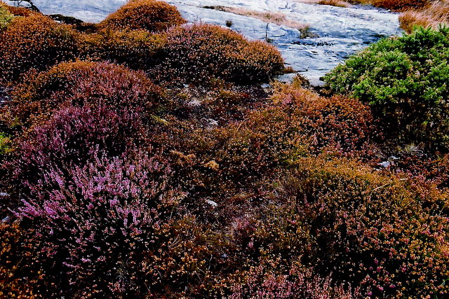 Mull Hill - Footpath on east side of hill (heather, stone)