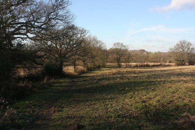 High Weald Landscape Trail, near Hartfield