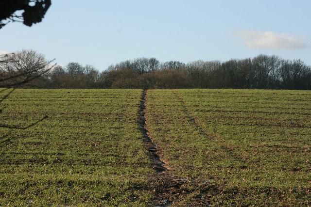 High Weald Landscape Trail crosses a field
