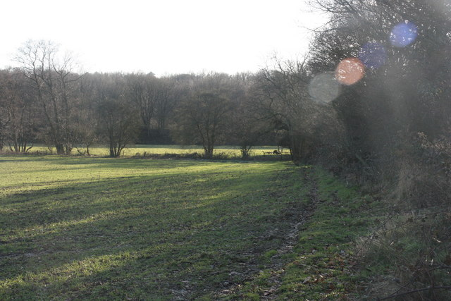 Hedge along the edge of a field