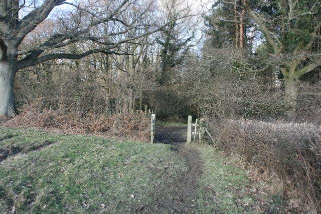 Bridleway enters Chartners Wood