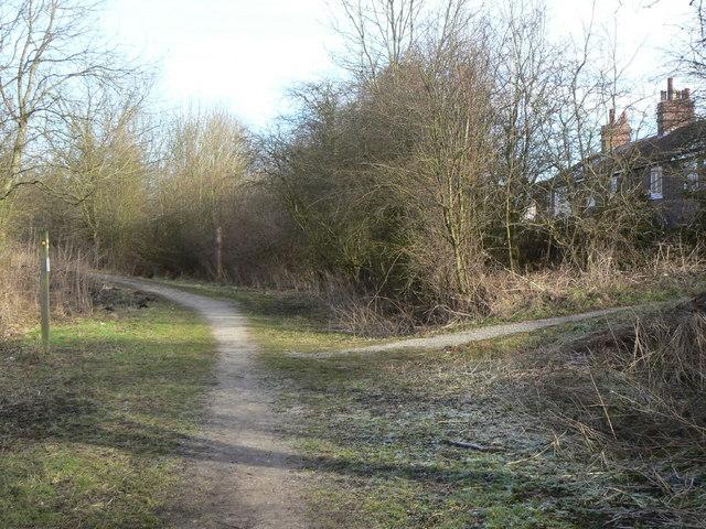 Pleasley trails
