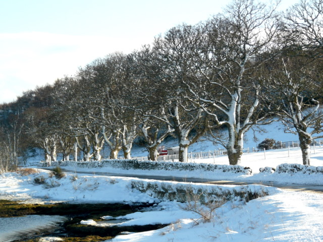 Minor road by Loch Fleet