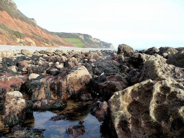 Branscombe Rocks - a crab's eye view
