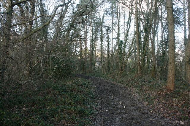 Bridleway,  Chartners Wood