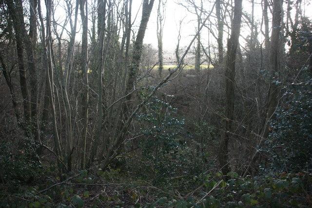 Chartners Wood