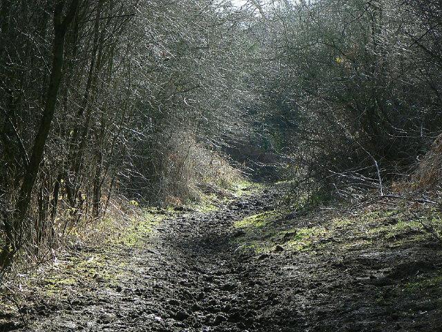 Longhedge Lane