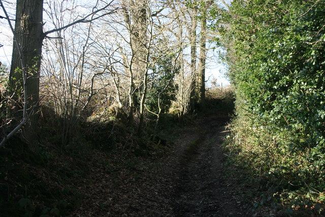 Bridleway north of Chartners Wood
