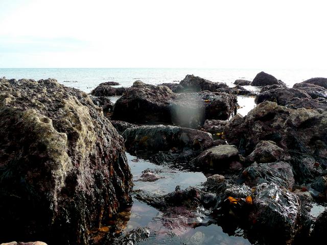 Branscome Ebb rocks at low tide