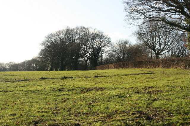 Field west of the bridleway north of Chartners Wood
