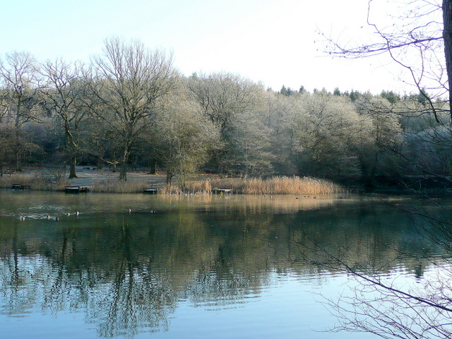 Cannop upper pond 1