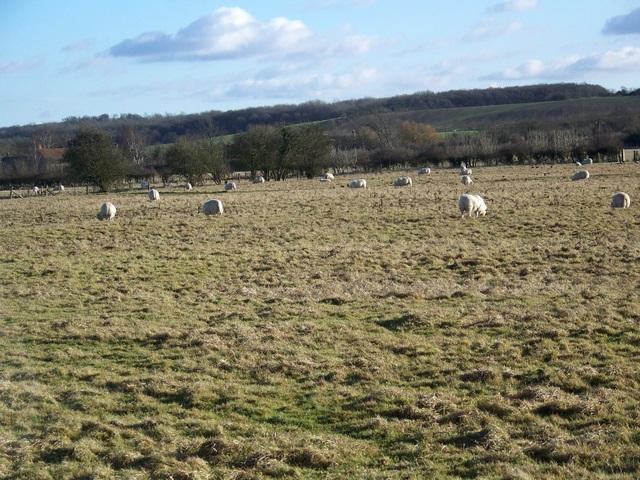 Rough grazing near Buscot