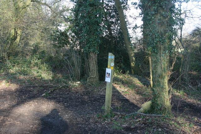 Waymarker at the footpath / bridleway junction south of Butcherfield Lane