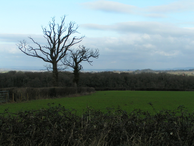 Winter trees near Aylesbeare