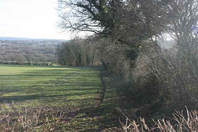 Hedge running south from the lane to St Ives Farm