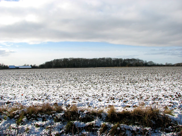 Snowy field west of Woodton Road