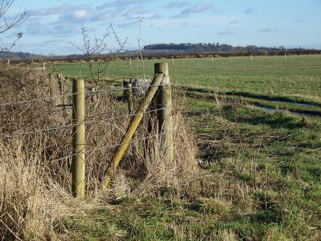 Grazing fields near Upper Inglesham