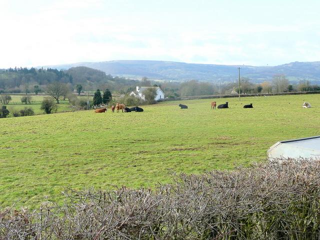 Usk valley pasture