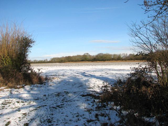 Spring Wood viewed from Springwood Lane