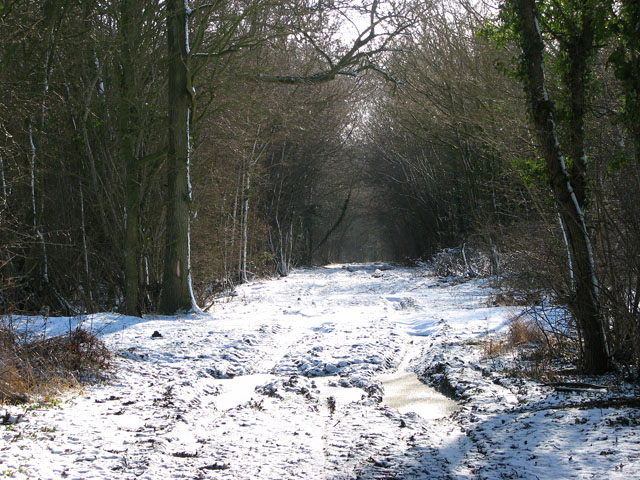 Frozen puddles on Green Lane
