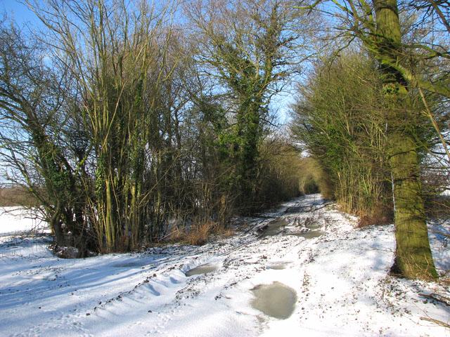View north along a snowy Green Lane