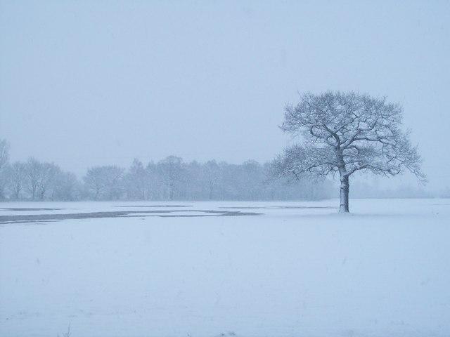 Winter Tree, Aston-on-Trent
